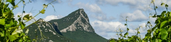 Couleurs de Terroir, Chateau Euzieres, Vins AOP Pic saint Loup