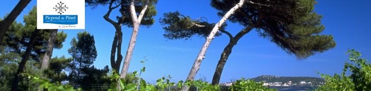 Couleurs de Terroir, Domaine Arnaud-Gaujal, AOP Picpoul de Pinet